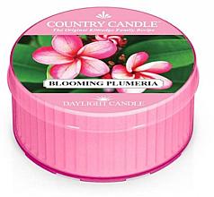 Parfüm, Parfüméria, kozmetikum Illatosított gyertya - Kringle Candle Blooming Plumeria